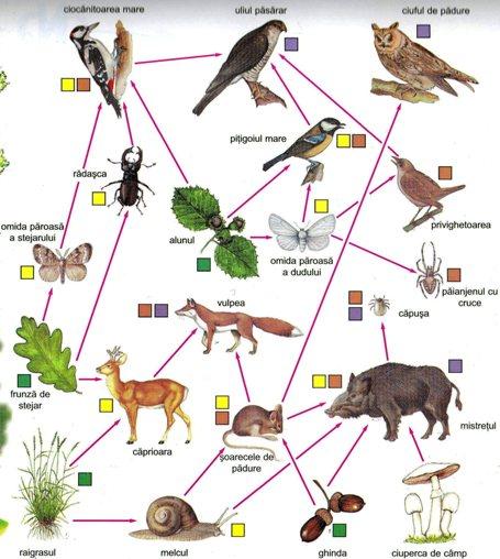 Proiect didactic Biologie - Relatii trofice in ecosisteme